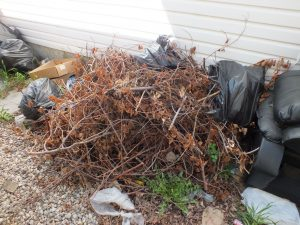 Tree Clippings